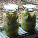 Pickled limes fermenting