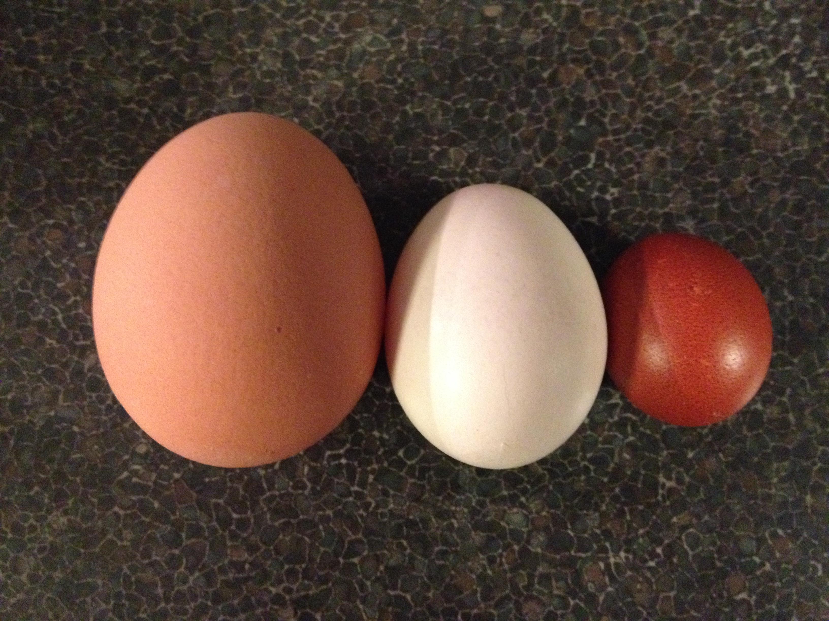 eggs archives the greening of gavin