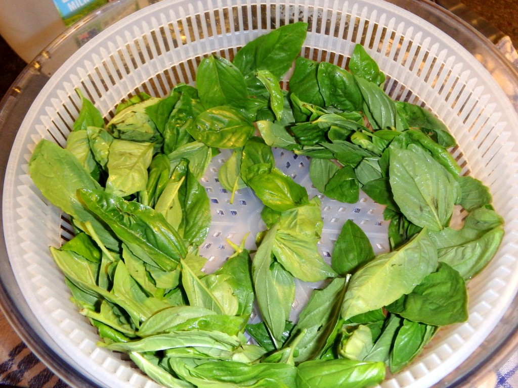 Basil leaves after spinning