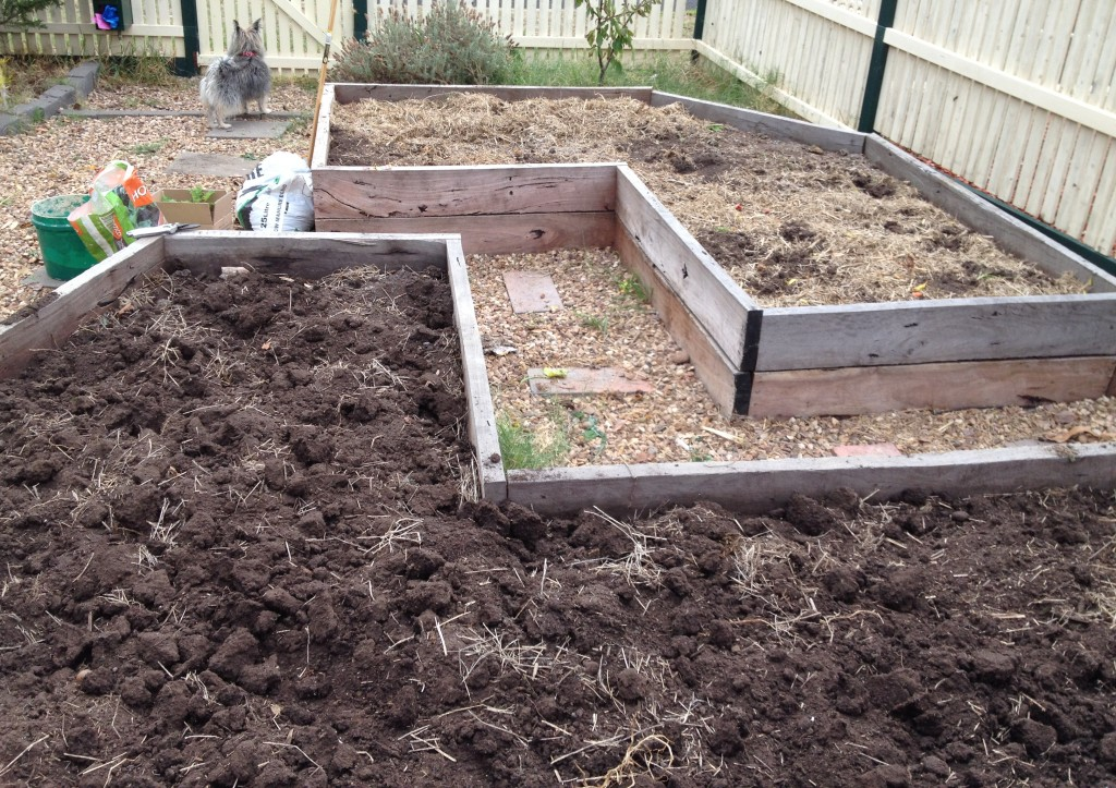 Improving fertility in garden beds for Brassica and Allium crops