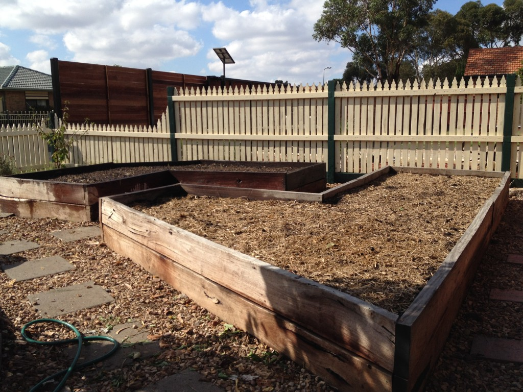 Prepared garden beds for Brassica and Allium