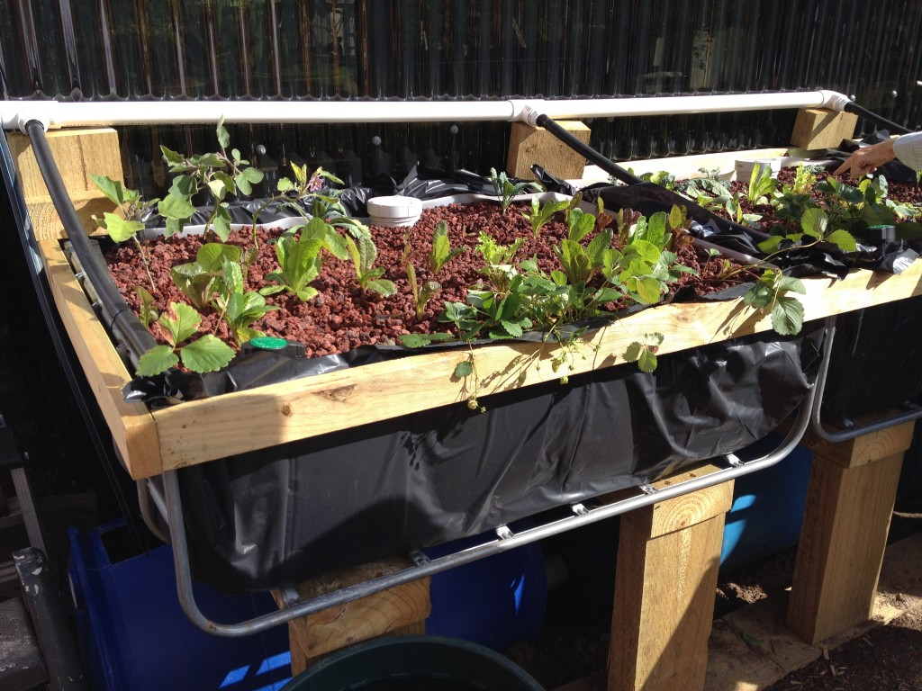 Grow bed - Aquaponics