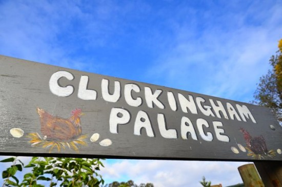 Cluckingham Palace sign