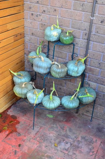 Pumpkin storage rack