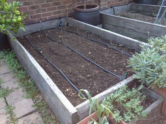 Bed prepared for broad beans