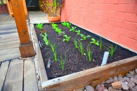 Growing salad greens in a wicking bed