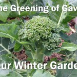 Our Winter Garden overlay