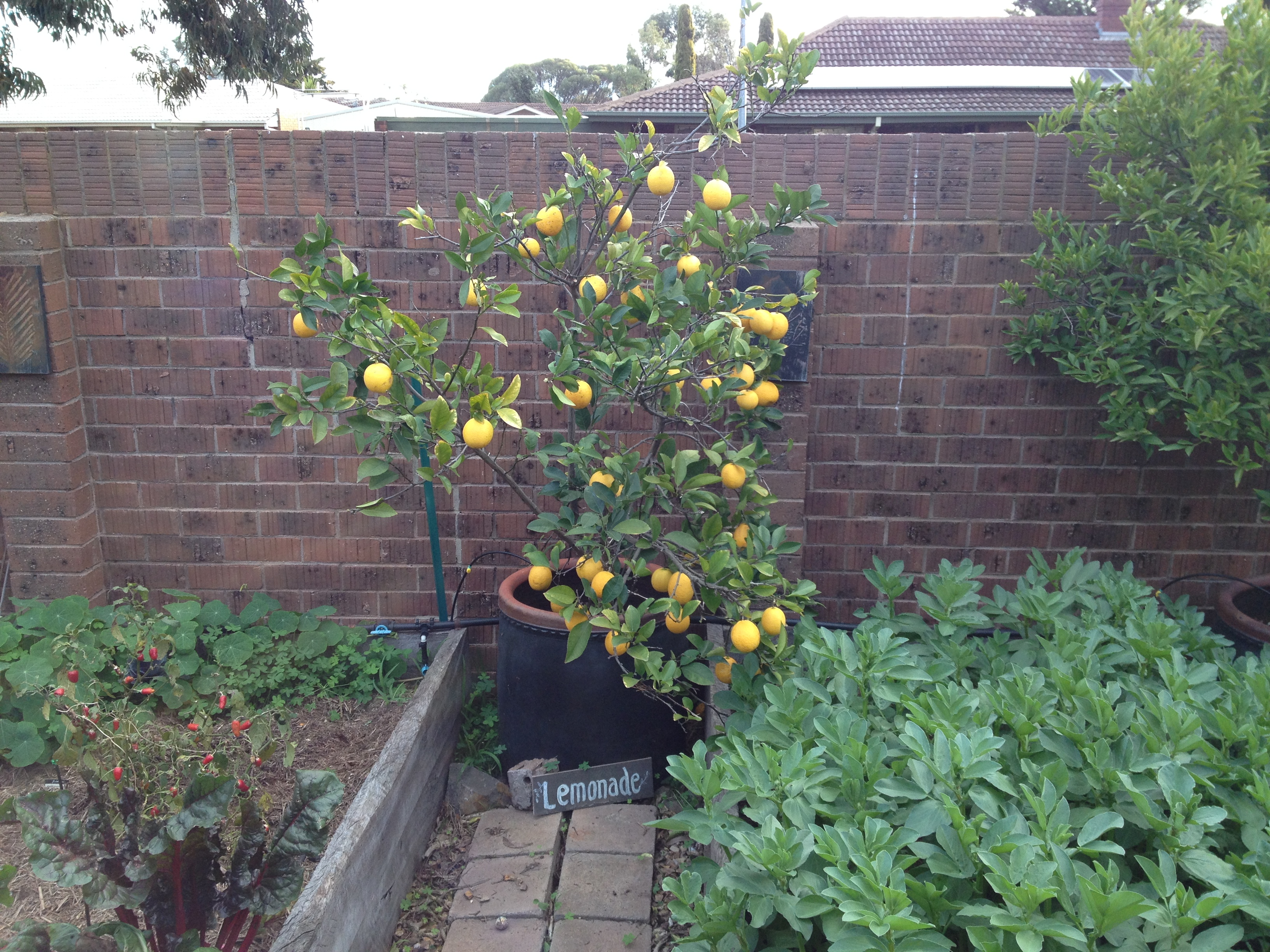 100 planting fruit trees in winter summer citrus growth brings autumn harvest mississippi - Planting fruit trees in autumn ...