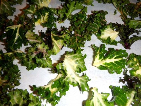 Kale leaves spaced apart