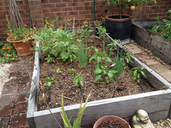 Suburban Food Farm - December 2014 - Garden Bed One