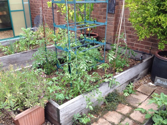 Suburban Food Farm - December 2014 - Garden Bed Two