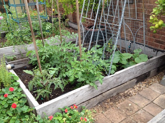 Suburban Food Farm - December 2014 - Garden Bed Three