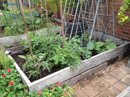 Suburban Food Farm - December 2014 - Garden Bed Three