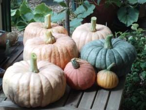 Pumpkins in 2010