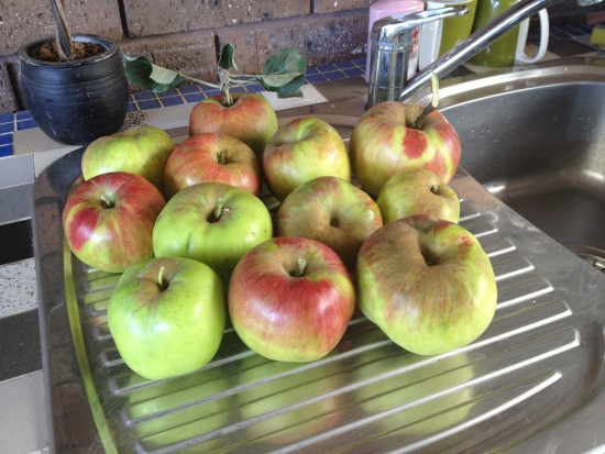 Organic Jonathan Apples