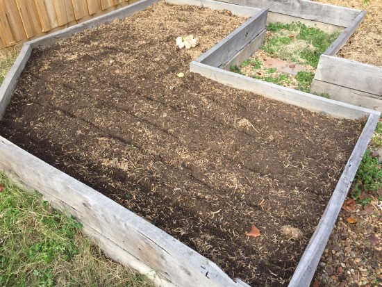 Preparing bed for Australian Purple Garlic