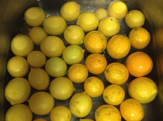 Washing citrus for 2 fruit marmalade