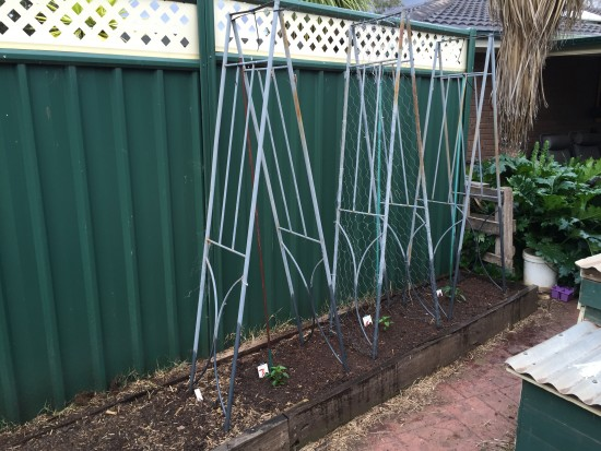 How to plant beans - climbing frame