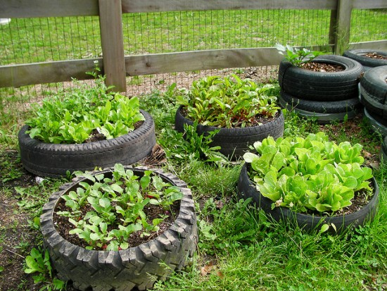 Truck tyre raised garden beds