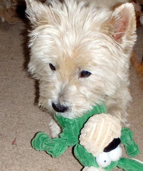 Teddy Loving his toy