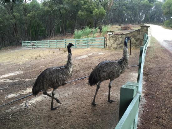 Macedon Emu Farm