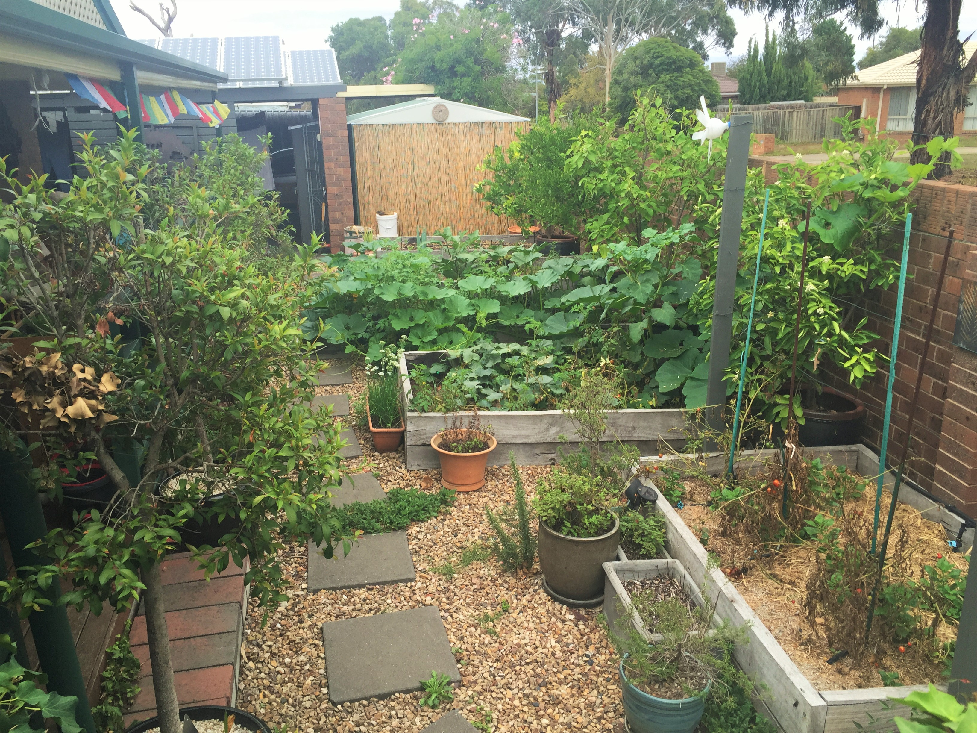 No dig vegetable gardens with raised garden beds - Autumn Garden 2016