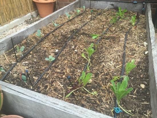 Cauliflower and salad greens